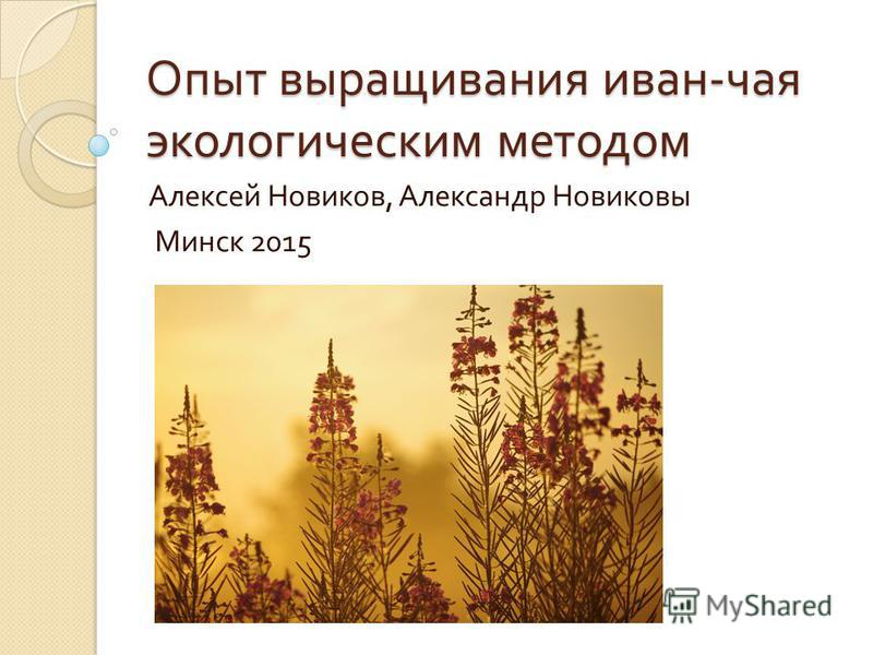 Опыт выращивания иван - чая экологическим методом Алексей Новиков, Александр Новиковы Минск 2015