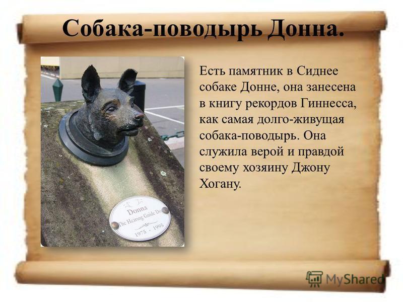 Собака-поводырь Донна. Есть памятник в Сиднее собаке Донне, она занесена в книгу рекордов Гиннесса, как самая долго-живущая собака-поводырь. Она служила верой и правдой своему хозяину Джону Хогану.