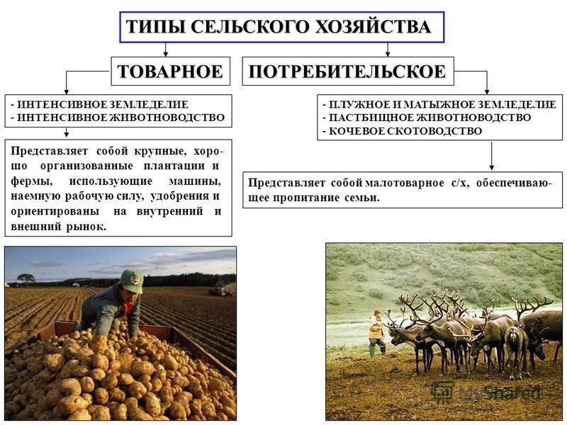 ТИПЫ СЕЛЬСКОГО ХОЗЯЙСТВА ТОВАРНОЕПОТРЕБИТЕЛЬСКОЕ - ИНТЕНСИВНОЕ ЗЕМЛЕДЕЛИЕ - ИНТЕНСИВНОЕ ЖИВОТНОВОДСТВО Представляет собой крупные, хорошо организованные плантации и фермы, использующие машины, наемную рабочую силу, удобрения и ориентированы на внутре