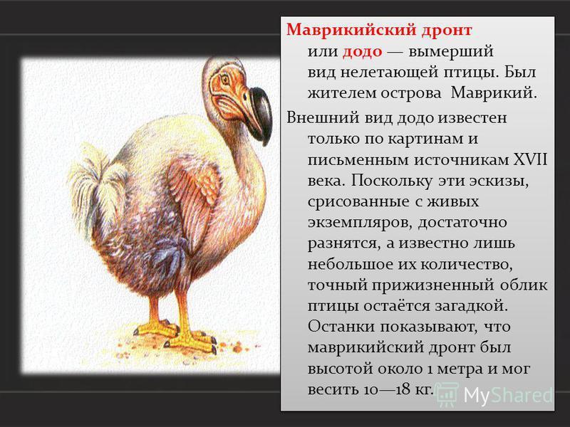 Маврикийский дронт или додо вымерший вид нелетающей птицы. Был жителем острова Маврикий. Внешний вид додо известен только по картинам и письменным источникам XVII века. Поскольку эти эскизы, срисованные с живых экземпляров, достаточно разнятся, а изв