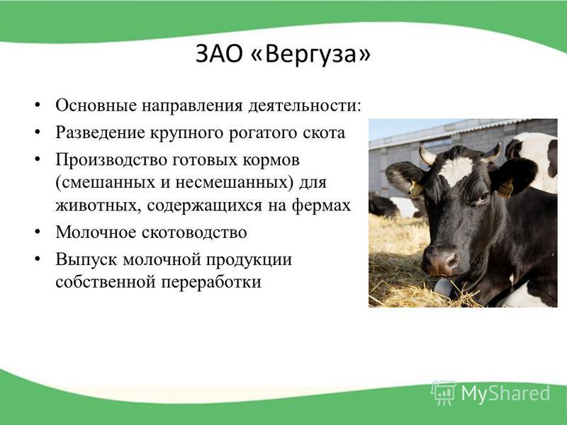 ЗАО «Вергуза» Основные направления деятельности: Разведение крупного рогатого скота Производство готовых кормов (смешанных и несмешанных) для животных, содержащихся на фермах Молочное скотоводство Выпуск молочной продукции собственной переработки