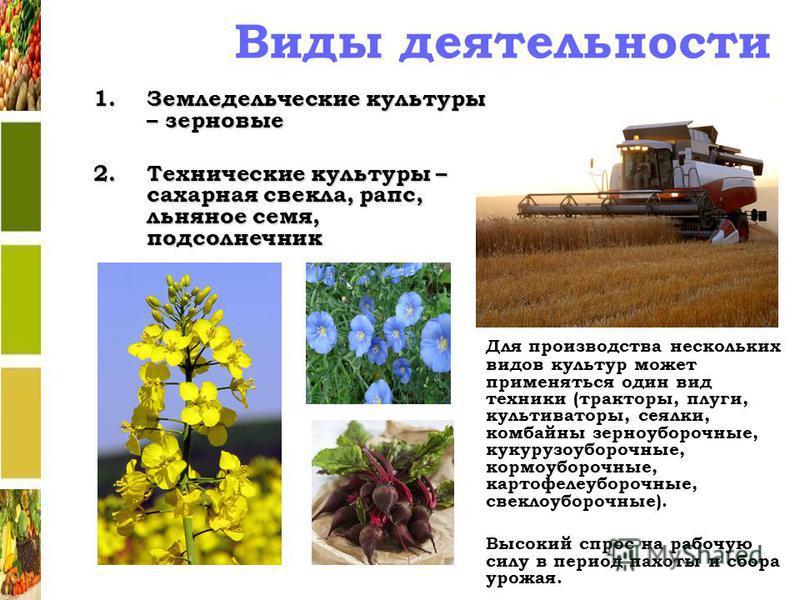 Виды деятельности 1. Земледельческие культуры – зерновые 2. Технические культуры – сахарная свекла, рапс, льняное семя, подсолнечник Для производства нескольких видов культур может применяться один вид техники (тракторы, плуги, культиваторы, сеялки,