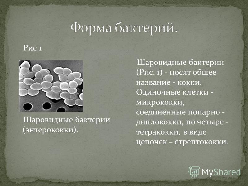 Рис.1 Шаровидные бактерии (энтерококки). Шаровидные бактерии (Рис. 1) - носят общее название - кокки. Одиночные клетки - микрококки, соединенные попарно - диплококки, по четыре - тетракокки, в виде цепочек – стрептококки.