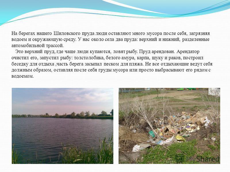 На берегах нашего Шиловского пруда люди оставляют много мусора после себя, загрязняя водоем и окружающую среду. У нас около села два пруда: верхний и нижний, разделенные автомобильной трассой. Это верхний пруд, где чаще люди купаются, ловят рыбу. Пру