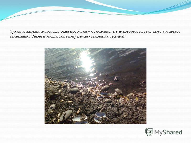 Сухим и жарким летом еще одна проблема – обмеление, а в некоторых местах даже частичное высыхание. Рыбы и моллюски гибнут, вода становится грязной.