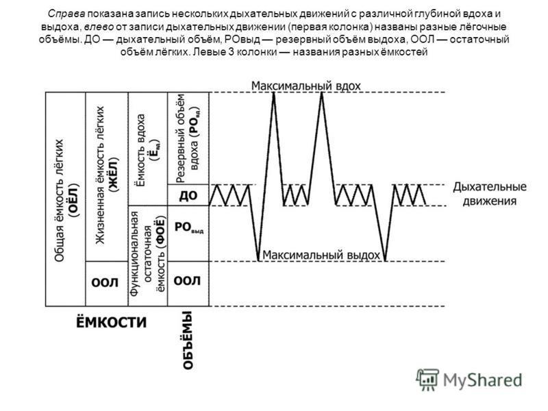 Справа показана запись нескольких дыхательных движений с различной глубиной вдоха и выдоха, влево от записи дыхательных движении (первая колонка) названы разные лёгочные объёмы. ДО дыхательный объём, РОвыд резервный объём выдоха, ООЛ остаточный объём