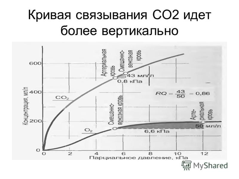 Кривая связывания СО2 идет более вертикально