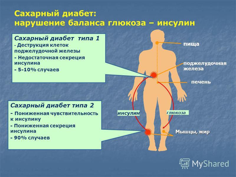 Мышцы, жир Сахарный диабет: нарушение баланса глюкоза – инсулин печень поджелудочная железа глюкоза инсулин пища Сахарный диабет типа 1 - Деструкция клеток поджелудочной железы - Недостаточная секреция инсулина - 5-10% случаев Сахарный диабет типа 2