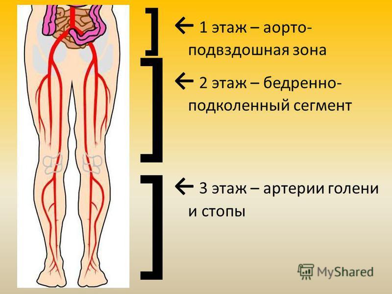 1 этаж – аорто- подвздошная зона 2 этаж – бедренно- подколенный сегмент 3 этаж – артерии голени и стопы ] ] ]