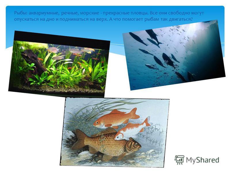 Рыбы: аквариумные, речные, морские - прекрасные пловцы. Все они свободно могут опускаться на дно и подниматься на верх. А что помогает рыбам так двигаться?