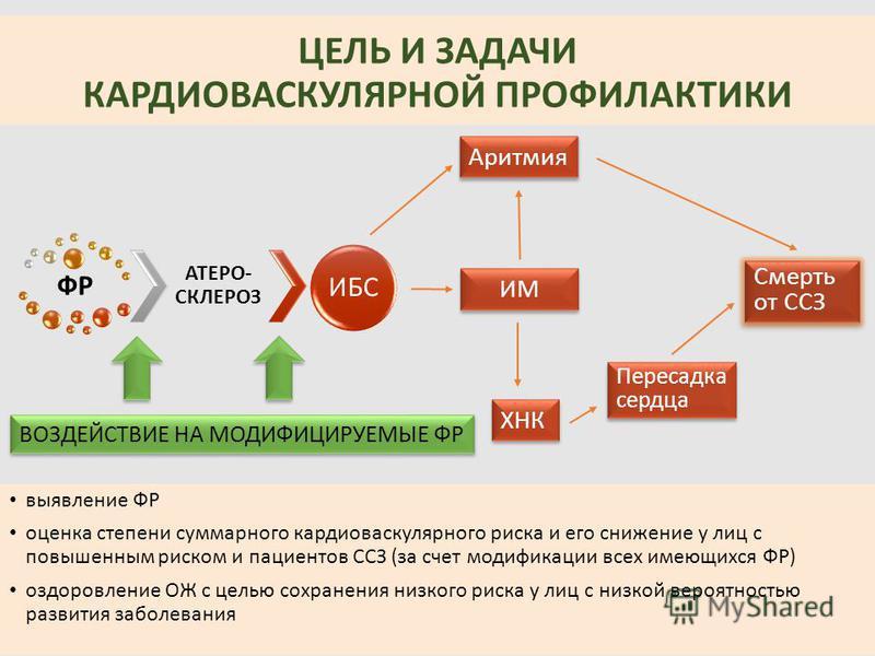 Презентация Профилактика Сердечно Сосудистых Заболеваний