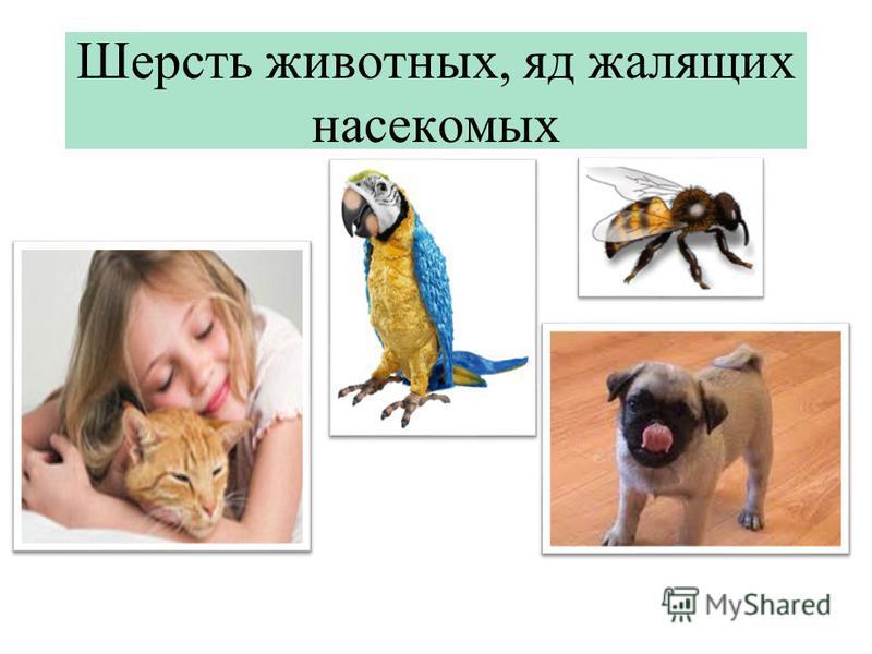 Шерсть животных, яд жалящих насекомых
