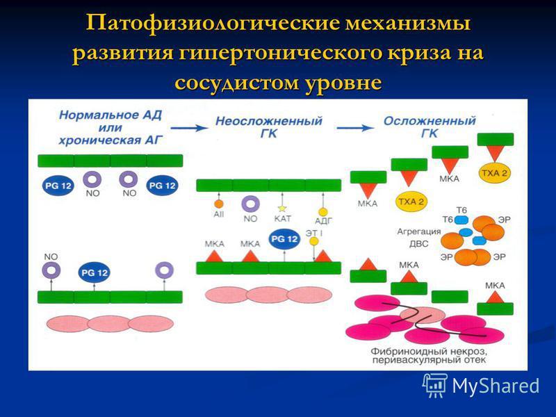 Патофизиологические механизмы развития гипертонического криза на сосудистом уровне