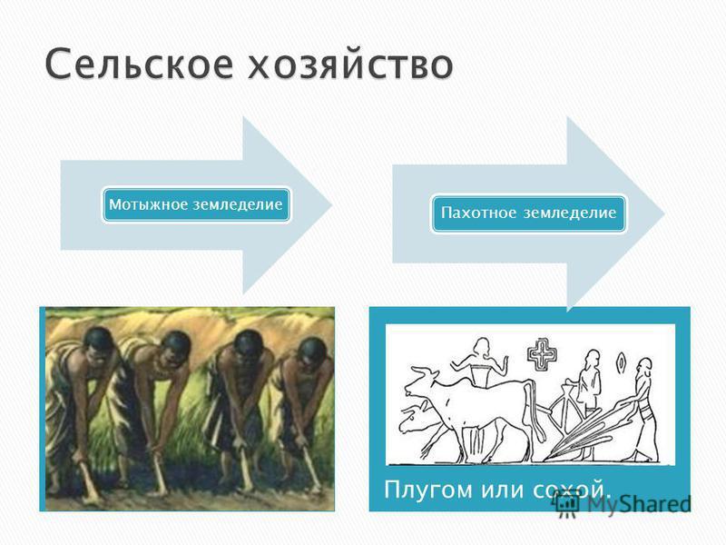 Плугом или сохой. Мотыжное земледелие Пахотное земледелие
