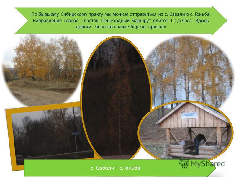 По бывшему Сибирскому тракту мы можем отправиться из с. Савали в с. Гоньба. Направление северо – восток. Пешеходный маршрут длится 1-1,5 часа. Вдоль дороги белоствольные берёзы признак с. Савали – с.Гоньба
