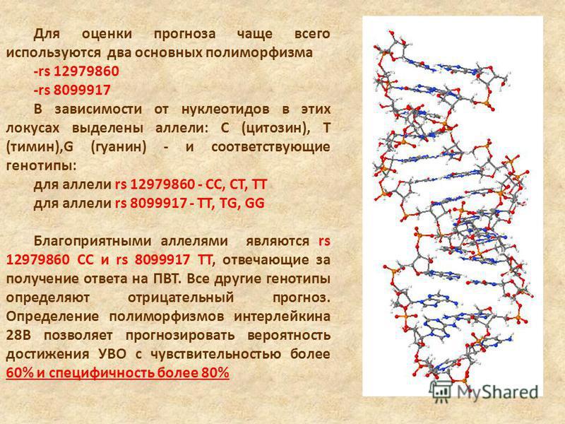 Для оценки прогноза чаще всего используются два основных полиморфизма -rs 12979860 -rs 8099917 В зависимости от нуклеотидов в этих локусах выделены аллели: С (цитозин), Т (тимин),G (гуанин) - и соответствующие генотипы: для аллели rs 12979860 - СС, С
