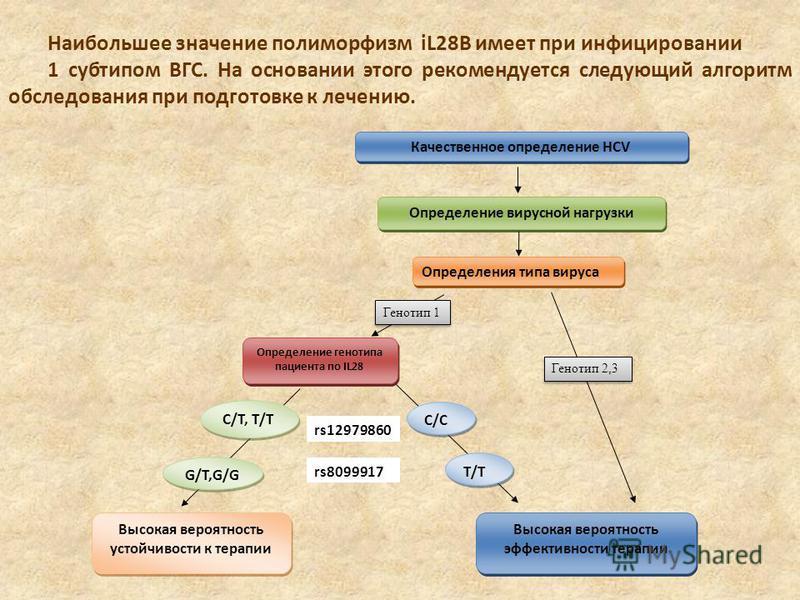 Наибольшее значение полиморфизм iL28B имеет при инфицировании 1 субтипом ВГС. На основании этого рекомендуется следующий алгоритм обследования при подготовке к лечению. Качественное определение HCV Определение вирусной нагрузки Определения типа вирус