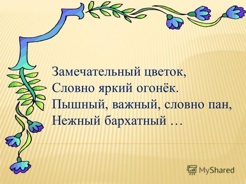 Замечательный цветок, Словно яркий огонёк. Пышный, важный, словно пан, Нежный бархатный …