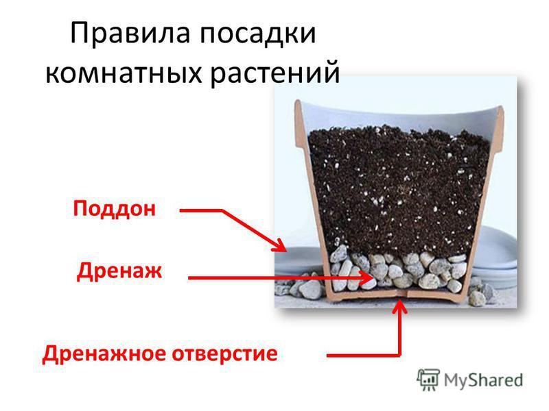 Дренажное отверстие Дренаж Поддон Правила посадки комнатных растений