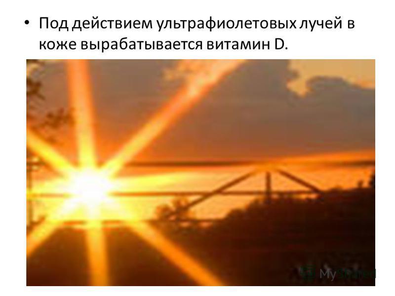 Под действием ультрафиолетовых лучей в коже вырабатывается витамин D.