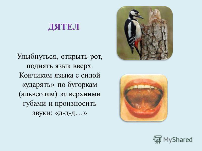 ДЯТЕЛ Улыбнуться, открыть рот, поднять язык вверх. Кончиком языка с силой «ударять» по бугоркам (альвеолам) за верхними губами и произносить звуки: «д-д-д…»