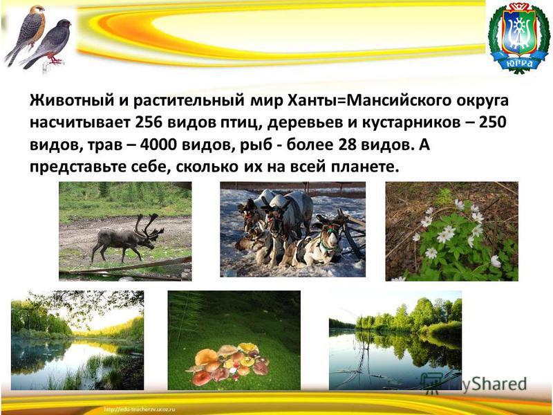 Животный и растительный мир Ханты=Мансийского округа насчитывает 256 видов птиц, деревьев и кустарников – 250 видов, трав – 4000 видов, рыб - более 28 видов. А представьте себе, сколько их на всей планете.