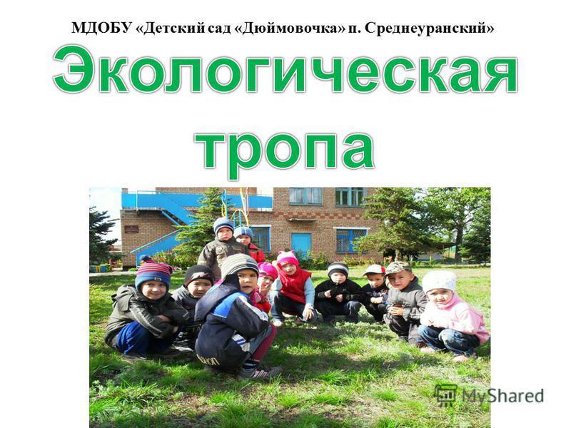 МДОБУ «Детский сад «Дюймовочка» п. Среднеуранский»