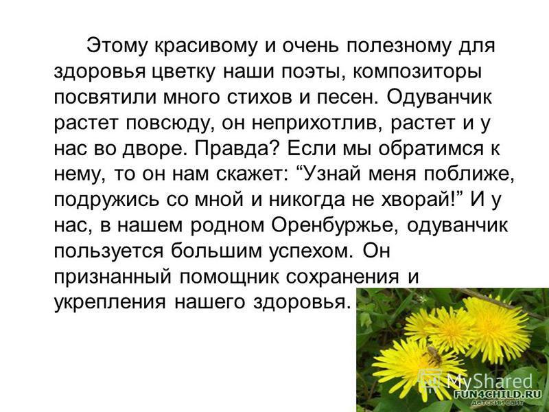 Этому красивому и очень полезному для здоровья цветку наши поэты, композиторы посвятили много стихов и песен. Одуванчик растет повсюду, он неприхотлив, растет и у нас во дворе. Правда? Если мы обратимся к нему, то он нам скажет: Узнай меня поближе, п