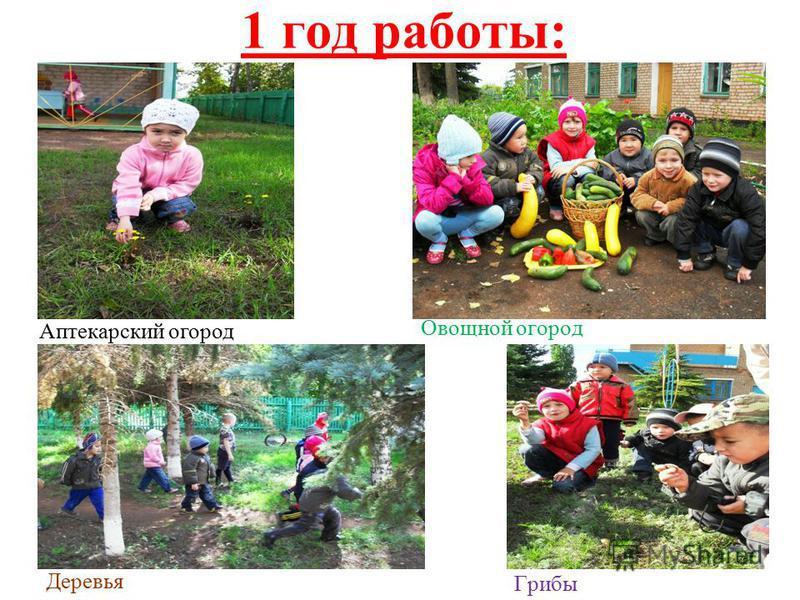 1 год работы: Овощной огород Грибы Деревья Аптекарский огород
