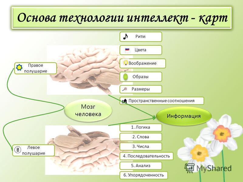 Основа технологии интеллект - карт Мозг человека Правое полушарие Левое полушарие 1. Логика Пространственные соотношения Размеры Воображение Цвета Ритм Образы 2. Слова 3. Числа 4. Последовательность 5. Анализ 6. Упорядоченность Информация