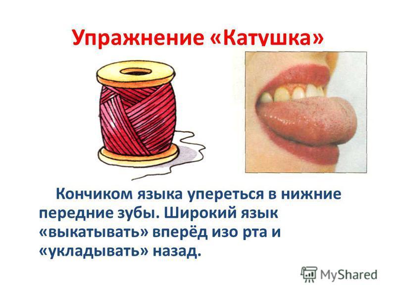 Упражнение «Катушка» Кончиком языка упереться в нижние передние зубы. Широкий язык «выкатывать» вперёд изо рта и «укладывать» назад.
