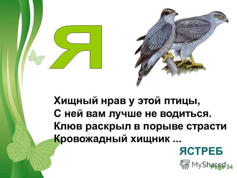 Free Powerpoint TemplatesPage 34 Хищный нрав у этой птицы, С ней вам лучше не водиться. Клюв раскрыл в порыве страсти Кровожадный хищник... ЯСТРЕБ