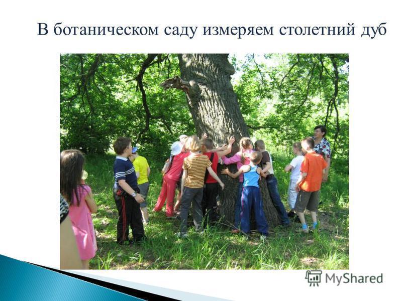 В ботаническом саду измеряем столетний дуб