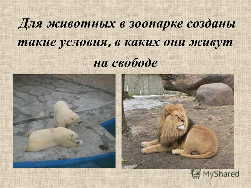 Для животных в зоопарке созданы такие условия, в каких они живут на свободе