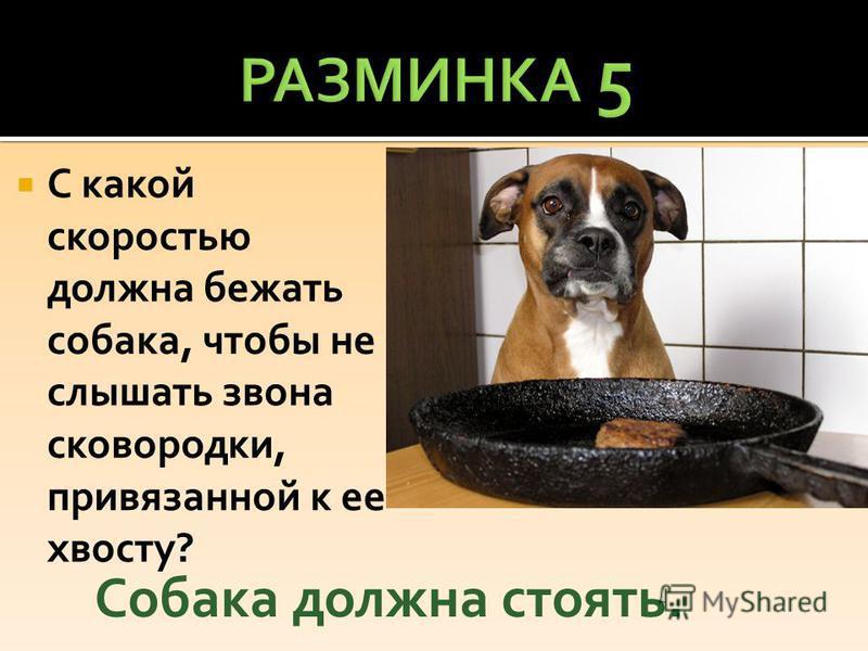 С какой скоростью должна бежать собака, чтобы не слышать звона сковородки, привязанной к ее хвосту? Собака должна стоять.