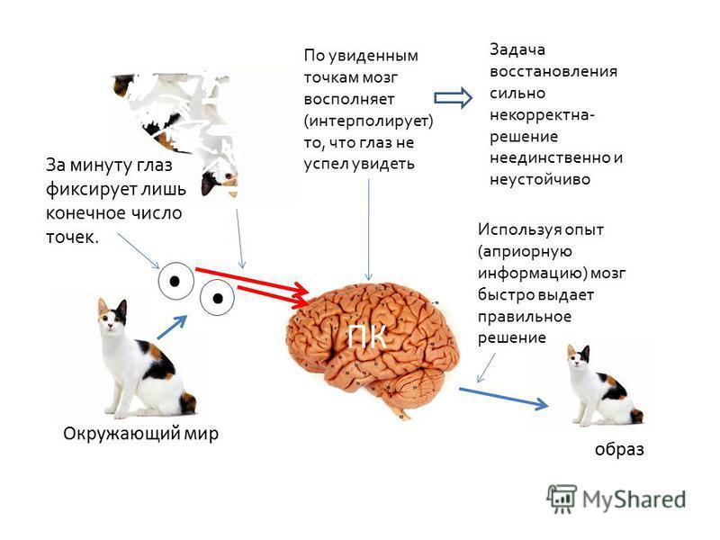 Окружающий мир ПК За минуту глаз фиксирует лишь конечное число точек. По увиденным точкам мозг восполняет (интерполирует) то, что глаз не успел увидеть Задача восстановления сильно некорректна- решение не единственно и неустойчиво Используя опыт (апр