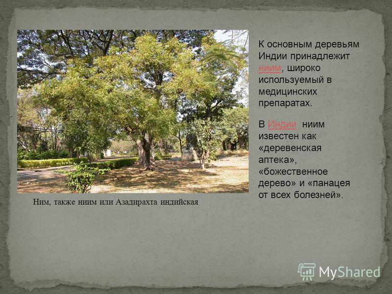 К основным деревьям Индии принадлежит ним, широко используемый в медицинских препаратах. ним В Индии ним известен как «деревенская аптека», «божественное дерево» и «панацея от всех болезней».Индии Ним, также ним или Азадирахта индийская