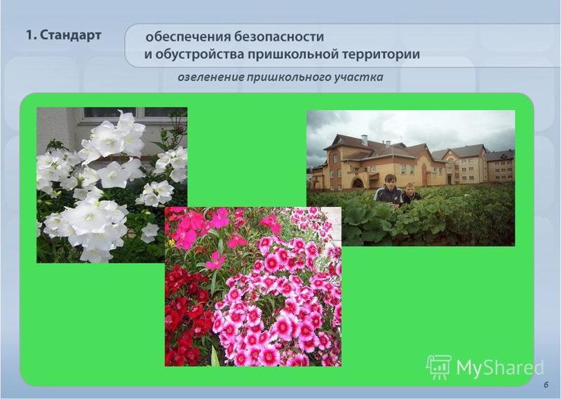 озеленение пришкольного участка 6