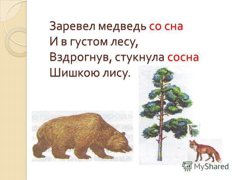 Заревел медведь со сна И в густом лесу, Вздрогнув, стукнула сосна Шишкою лису.