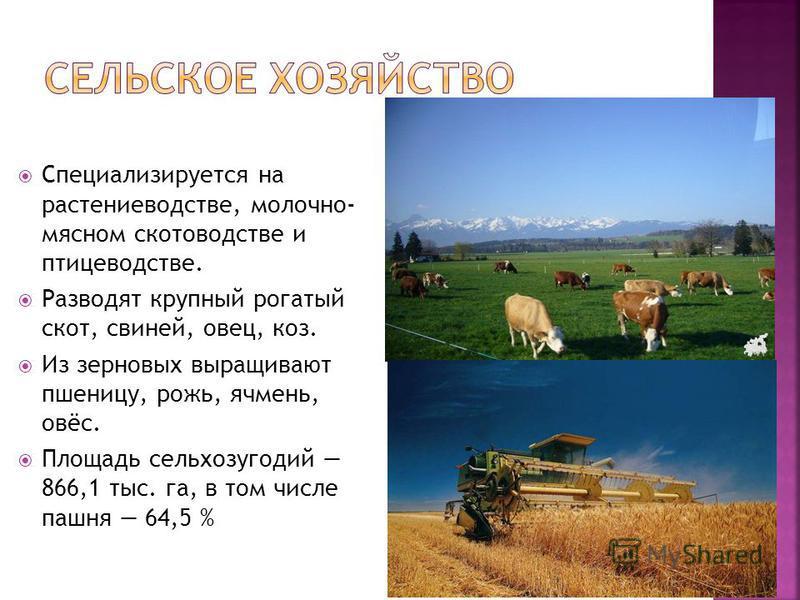 Специализируется на растениеводстве, молочно- мясном скотоводстве и птицеводстве. Разводят крупный рогатый скот, свиней, овец, коз. Из зерновых выращивают пшеницу, рожь, ячмень, овёс. Площадь сельхозугодий 866,1 тыс. га, в том числе пашня 64,5 %