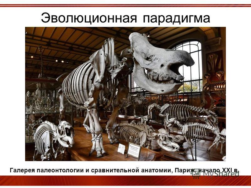 Эволюционная парадигма Галерея палеонтологии и сравнительной анатомии, Париж, начало XXI в.