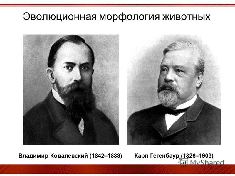 Эволюционная морфология животных Владимир Ковалевский (1842–1883) Карл Гегенбаур (1826–1903)