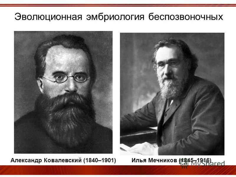 Эволюционная эмбриология беспозвоночных Александр Ковалевский (1840–1901) Илья Мечников (1845–1916)