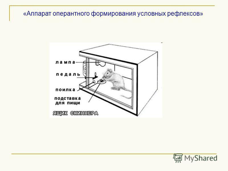 «Аппарат оперантного формирования условных рефлексов»