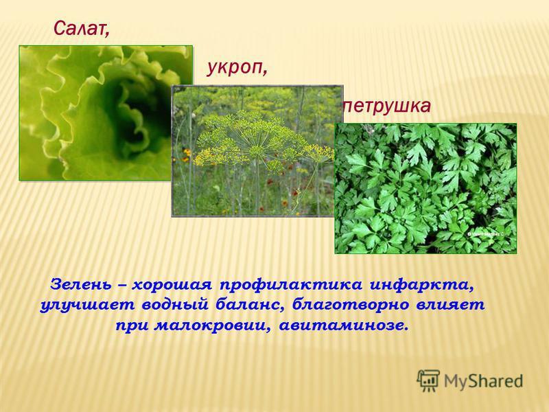 Салат, укроп, петрушка Зелень – хорошая профилактика инфаркта, улучшает водный баланс, благотворно влияет при малокровии, авитаминозе.