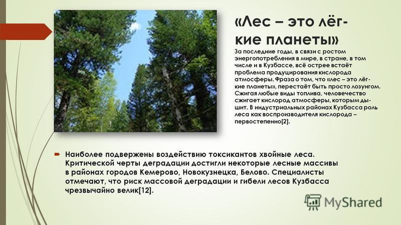«Лес – это лёг- кие планеты» За последние годы, в связи с ростом энергопотребления в мире, в стране, в том числе и в Кузбассе, всё острее встаёт проблема продуцирования кислорода атмосферы. Фраза о том, что «лес – это лёг- кие планеты», перестаёт быт