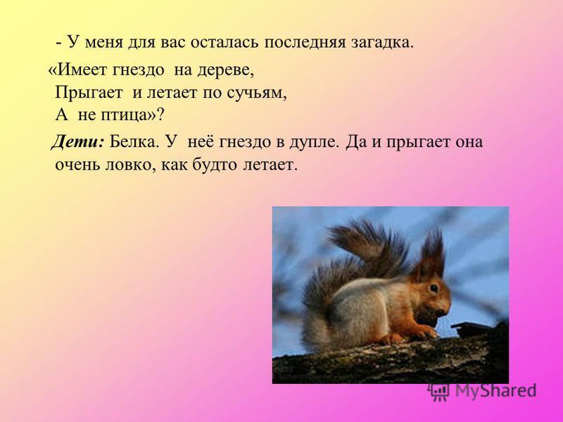 - У меня для вас осталась последняя загадка. «Имеет гнездо на дереве, Прыгает и летает по сучьям, А не птица»? Дети: Белка. У неё гнездо в дупле. Да и прыгает она очень ловко, как будто летает.