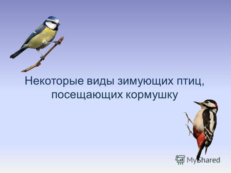 Некоторые виды зимующих птиц, посещающих кормушку