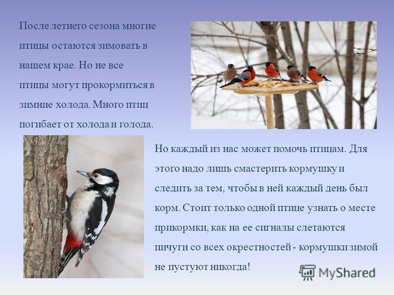 После летнего сезона многие птицы остаются зимовать в нашем крае. Но не все птицы могут прокормиться в зимние холода. Много птиц погибает от холода и голода. Но каждый из нас может помочь птицам. Для этого надо лишь смастерить кормушку и следить за т
