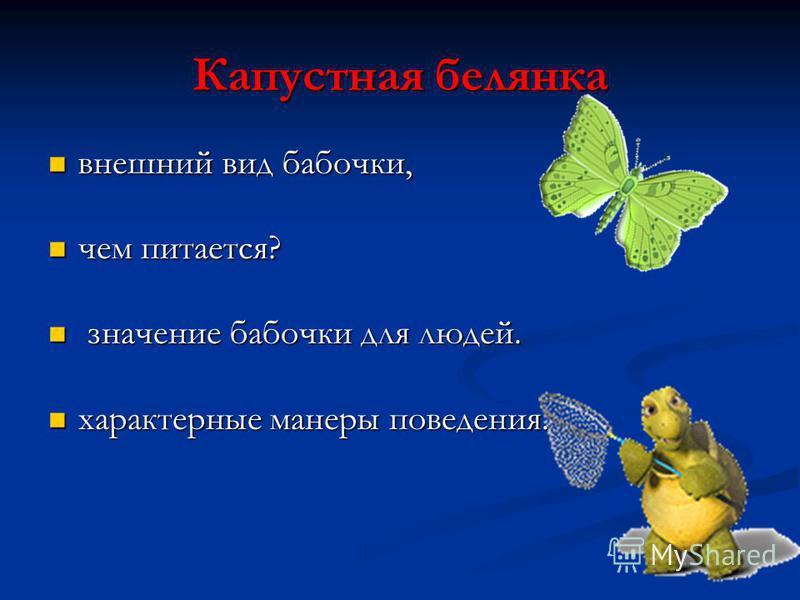 Капустная белянка внешний вид бабочки, внешний вид бабочки, чем питается? чем питается? значение бабочки для людей. значение бабочки для людей. характерные манеры поведения. характерные манеры поведения.